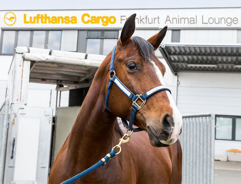Live Animal Transport With Heart And Mind Lufthansa Cargo