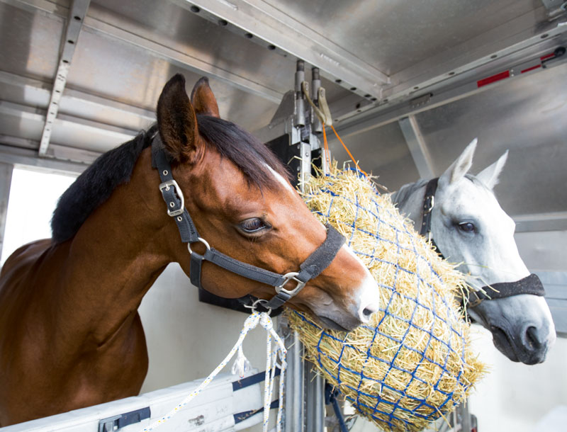 Live Td Animal Transport With Heart And Mind Lufthansa