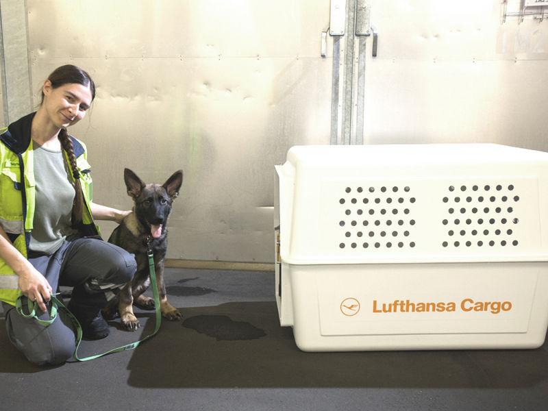 Live Animals - Lufthansa Cargo